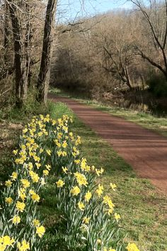 Spring on the Delaware Canal.  3/2012
