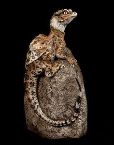 "Windstone ""Brown Bengal Cat 1"" Little Rock Dragon Figurine Fantasy Statue #eBay #dragon #bengal"