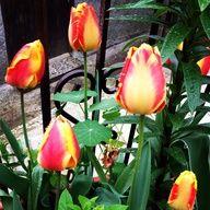 Primavera :)