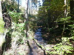 ....und auch hier wieder ein kleiner Bach entlang es Weges...