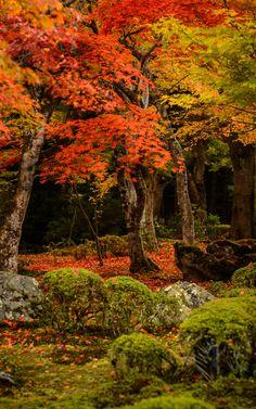 Gorgeous Autumn Colors!  Love this beautiful photo! <pin by Clarice Hurst on Autumn Splendor>