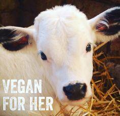 #veganforher #govegan #crueltyfree #animalcruelty #bacon #ham #pork #meat #lamb #legoflamb #lambchop #steak #filetmignon #chicken…