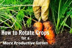 How to Rotate Crops - the Easy Way! - for a More Productive Garden