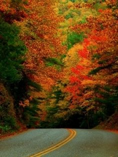 Fall Forest Landscape Wallpaper for HTC Phones