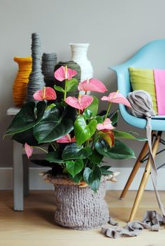 The Joy of Plants - Anthurium Varieties Foliage Plants, Potted Plants, Indoor Plants Low Light, Flamingo Flower, Floral Bedroom, Ideas Hogar, Unique Plants, Pastel Flowers, Pretty Pastel
