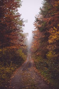 Glorious country road through the forest in Autumn. Autumn Day, Autumn Leaves, Fallen Leaves, Nature Architecture, Autumn Scenery, Autumn Aesthetic, Fall Pictures, Autumn Photos, All Nature