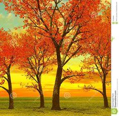 árboles-hermosos-del-otoño-12105926.jpg (1327×1300)