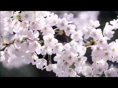 에픽톤 프로젝트(Epitone Project) 봄날,벚꽃 그리고 너 - YouTube