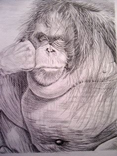 Graphite pencil drawing in A3 size on 300 gm paper. Done from a small newspaper cutout that my husband gave me to do for him to give me practice. Now framed and in his study. I guess we all have our Orangutan moments!