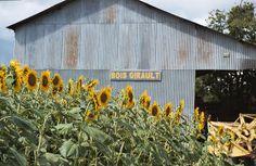 Voor een rustige vakantie kunt u kamperen op onze ruime boerderijcamping.