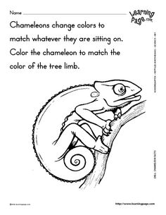 snake animals coloring pages for kids printable free