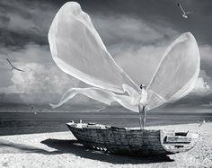 wings ~B&W P~