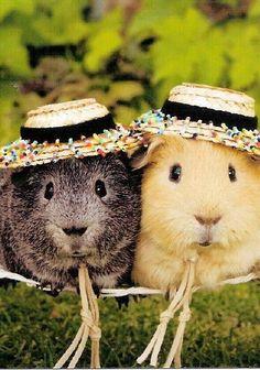 """before 'I googled' ninja guinea pig "" post googled guinea pig flying - Google Search"