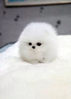 A puff ball with eyes