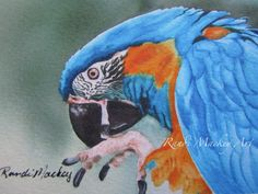 ACEO Limited Edition Gicleé Print Macaw by RandiMackeyArt on Etsy