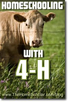 #Homeschooling with 4-H