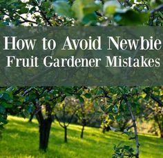 How to Avoid Newbie Fruit Gardener Mistakes and save money!