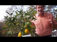 Winterizing Lemon Trees | At Home With P. Allen Smith