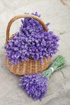 Big Flowers, Lavender Flowers, My Flower, Purple Flowers, Beautiful Flowers, Lavender Cottage, Lavender Fields, Diy Tea Bags, Flower Phone Wallpaper