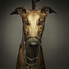 The Lure Series by Toby Dixon, via Behance.  Photo taken at Wentworth Park Greyhound track, Sydney, Australia