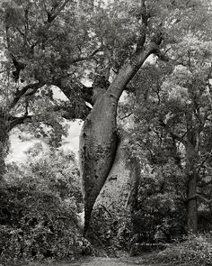 Beth Moon | by Decoupage girl