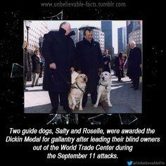 Unbelievable facts: Photo