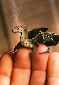 TEENY DRAGON! #squee #yourewelcome