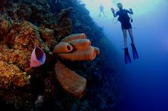 This part of the Caribbean still has a lively environment spared from pollution and overdevelopment of the region. The place is very small but its northern shore offers a great diving spots like the Jackson's Point and the Bloody Bay Wall which has a drop of about 7,000 feet.