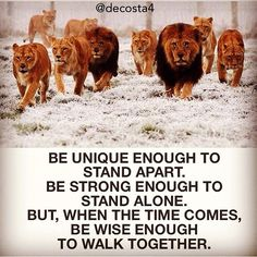Be unique enough to stand apart.  Be strong enough to stand alone.  But, when the time comes, but wise enough to walk together.