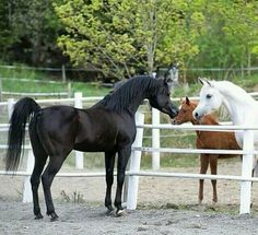Baby Horses, Horses And Dogs, Cute Horses, Horse Love, Wild Horses, Animals And Pets, Beautiful Arabian Horses, Most Beautiful Horses, Majestic Horse