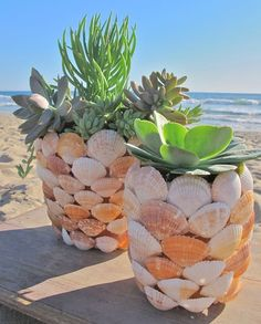 Succulent is a nice planter that fresh our room. This planter is usually placed indoor or outdoor. The colors and varieties of succulent make it become one of the most cheerful planters. Here are some creative ways to plant succulents at your house; Seashell Projects, Seashell Crafts, Beach Crafts, Summer Crafts, Diy Crafts, Crafts With Seashells, Summer Diy, Seashell Art, Seashell Decorations