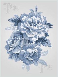 Illustration of hand drawn China Blue Peony bouquet - Simple background