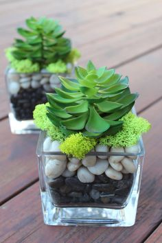 Artificial Succulent in a Square Glass Vase (2 pcs ) *inspiration* possibly use a REAL succulent in a version of this W/ Blue &White elements...?