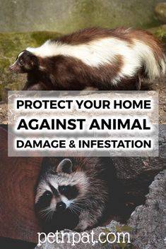 Protecting Your Home Against Animal Damage & Infestation  #animals #rodents #skunks #snakes #animalinfestation #pests #pestinfestation Animals For Kids, Farm Animals, Animals And Pets, Funny Animals, Animal Quotes, Animal Memes, Animal Nutrition, Pet Nutrition, Beekeeping Supplies