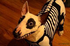"Bull terrier - best halloween ""makeup"" for dogs ever. Bull Terriers Anglais, English Bull Terriers, Costume Chien, Halloween Costume Game, Costume Ideas, Halloween Makeup, Halloween Ideas, Happy Halloween, Halloween Decorations"