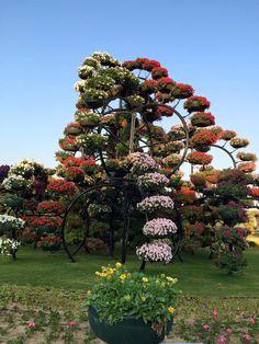 Scene from Miracle Garden Dubai