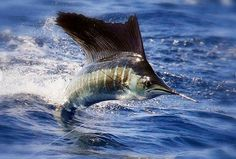 Great Fishing Inspires me! Sport Fishing in Turks & Caicos - tips and list of great charter providers.