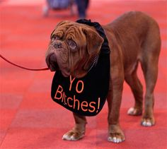Review of the year 2011: bizarre creatures and funny animal pictures - Telegraph