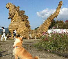 I'm a dinosaur   #dog #dogs #dogsperts #pet #doglover #cute #puppies #pups #lovemydog #dinosaurs #dinosaur