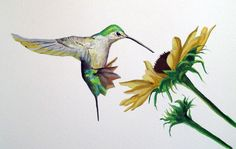 Hummingbird Painting Tutorial