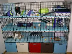 1000 Images About Lucky S Cage Ideas On Pinterest