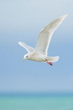 """"""" Quem sabe o amor me esperasse onde só chegam os barcos e as gaivotas? """" Mia Couto in """" Mulheres de Cinzas"""" (p.73)"""