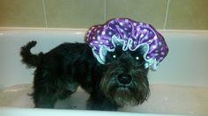 Bath time for Mr Bert