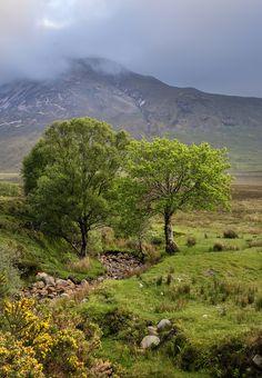 "wanderthewood: ""Glen Orchy, Argyll and Bute, Scotland by Matt Lethbridge """