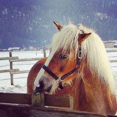 #horse in the #snow in #Austria. #paard in de #sneeuw in #Oostenrijk