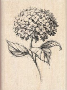 Inkadinkado Wood Mounted Rubber Stamp DD-Hydrangea