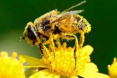 βότανα αλλεργική ρινίτιδα αλλεργίες