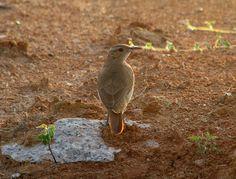 JoodeBarro | Endless Wildlife