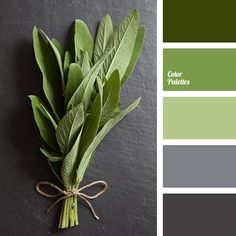 Color Palette Quite palette in which different shades of green - a deep da. - Color Palette Quite palette in which different shades of green – a deep dark green, grass a - Living Room Green, Bedroom Green, Bedroom Colors, Bedroom Ideas, Living Rooms, Green Bedrooms, Grey Living Room With Color, Dark Gray Bedroom, Bath Design
