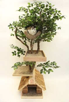 Love this! Not positive, but my fractured knowledge of Spanish decided this says something about a treehouse for your cat if you live in an apartment. - Si vives en un piso, seguro que esto le da algo de vidilla a tu gato! Una casita en un árbol!!!